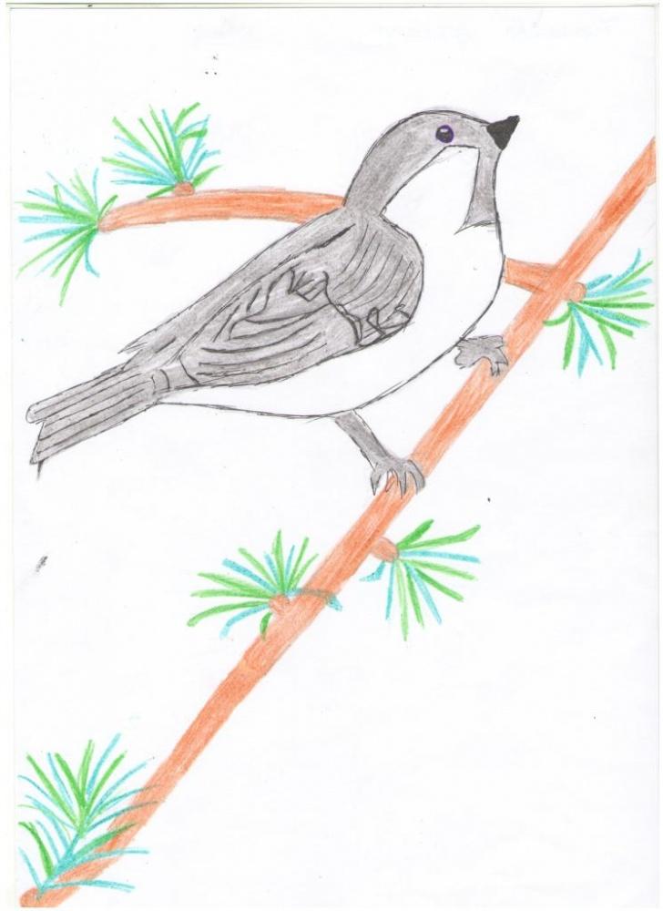 Нарисовать птицу пухляка