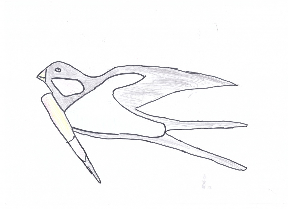Перелетные птицы рисование картинки