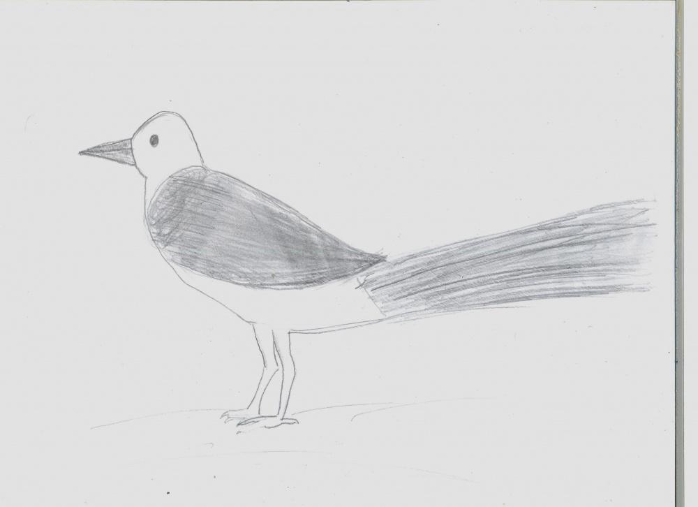 Сорока детские рисунки карандашом