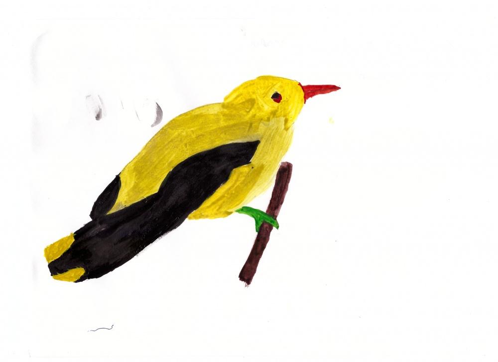 Иволга птица рисунок детский