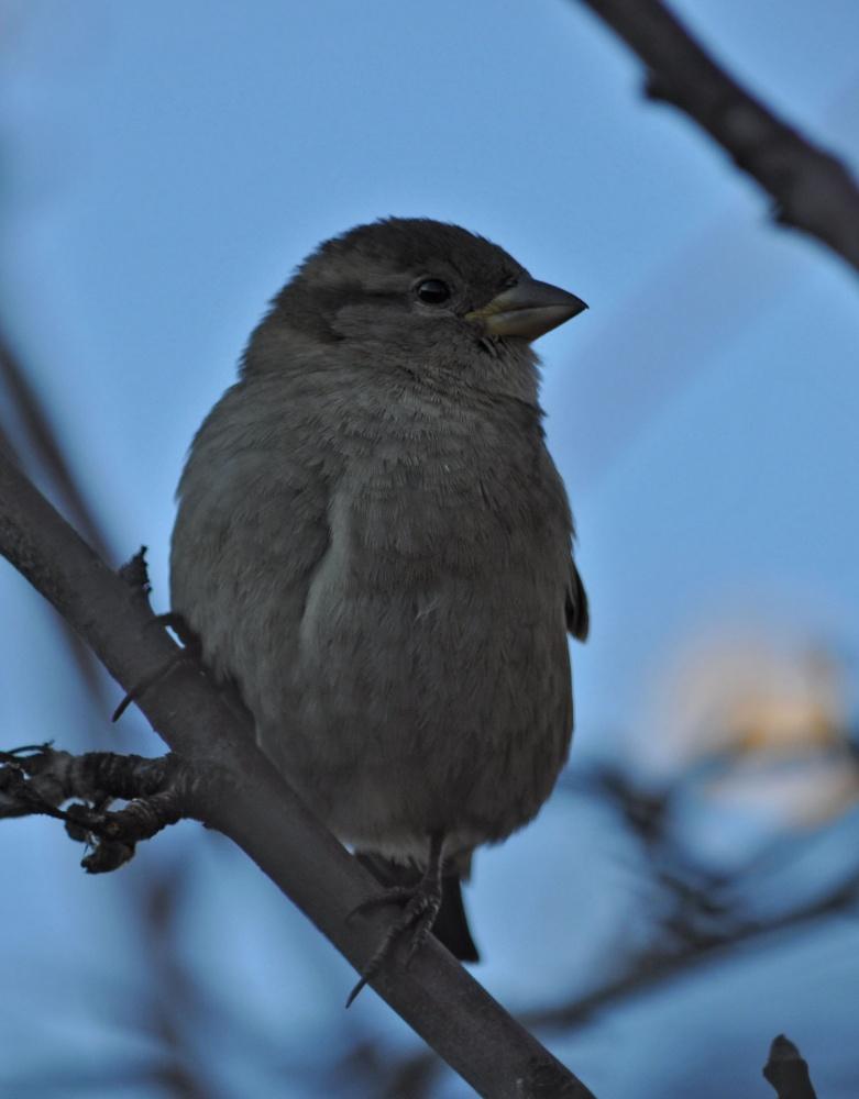 фото птиц в башкортостане всего, стоит сказать